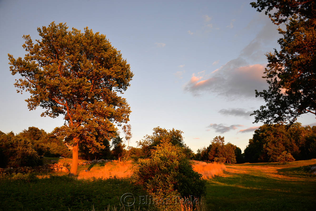 Pasture at the Golden Hour, Annisquam MA 2