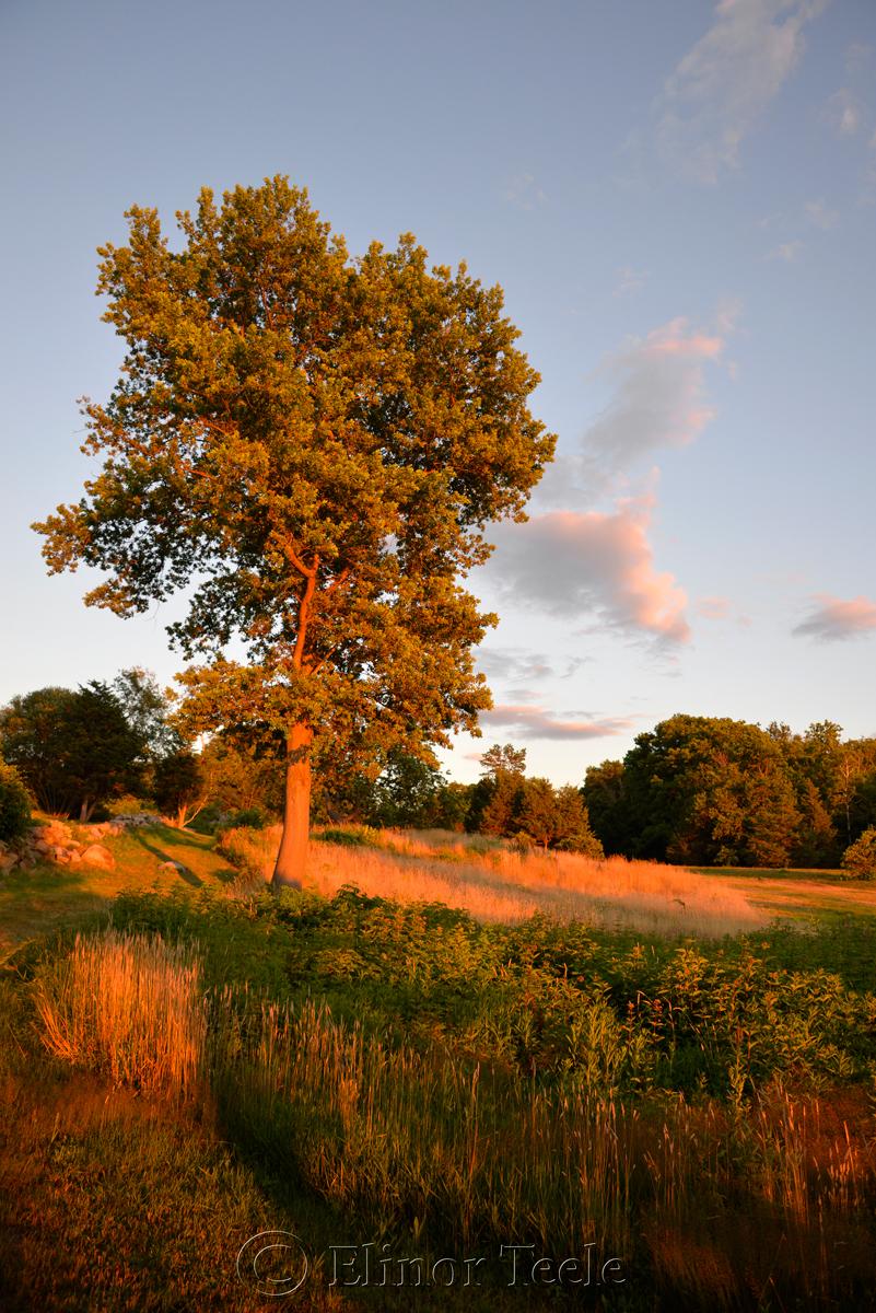 Pasture at the Golden Hour, Annisquam MA 3