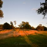 Pasture at the Golden Hour, Annisquam MA 5
