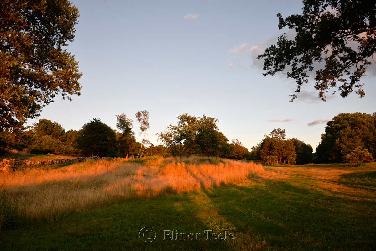 Pasture at the Golden Hour, Annisquam MA 5