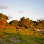 Pasture at the Golden Hour, Annisquam MA 6
