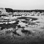 Marsh Grass at High Tide