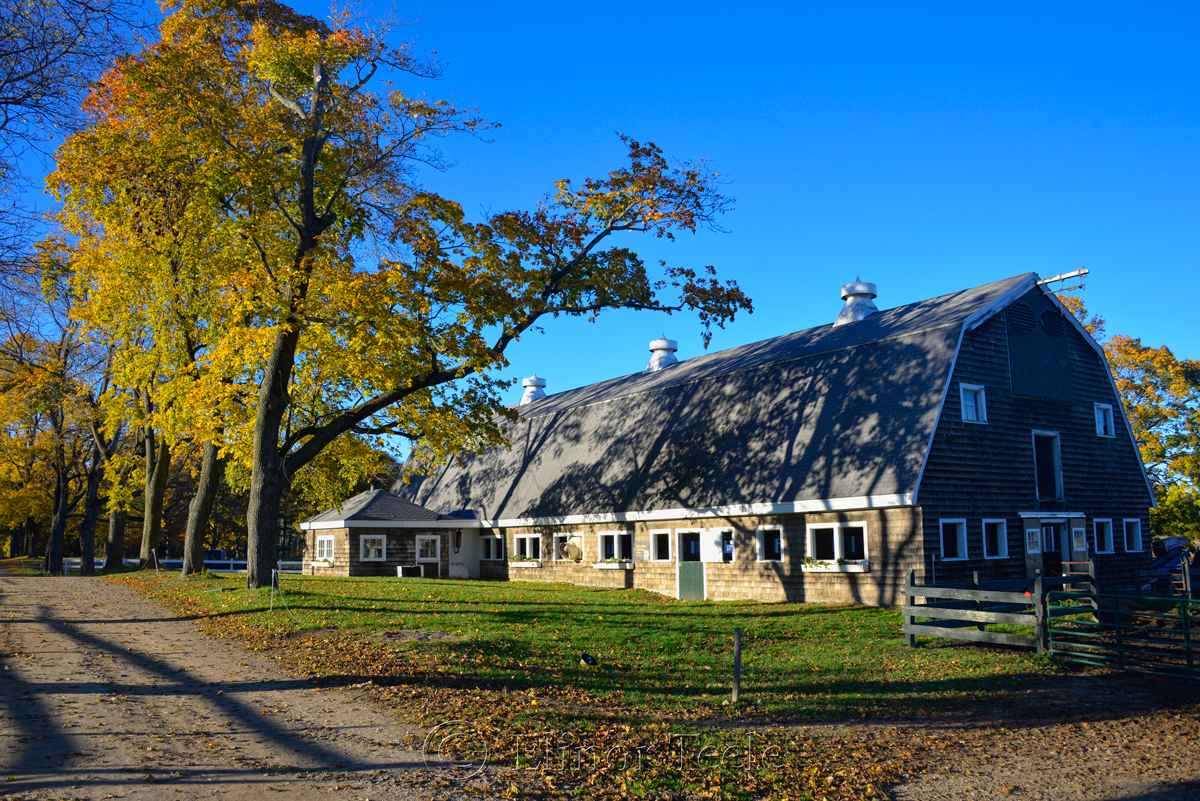 Appleton Farms - Dairy Barn in Fall 1