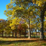 Appleton Farms - Fall Foliage 1