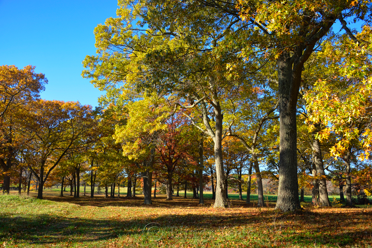 Appleton Farms - Fall Foliage 1