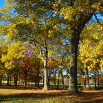 Appleton Farms - Fall Foliage 2