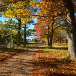 Appleton Farms - Fall Foliage 3