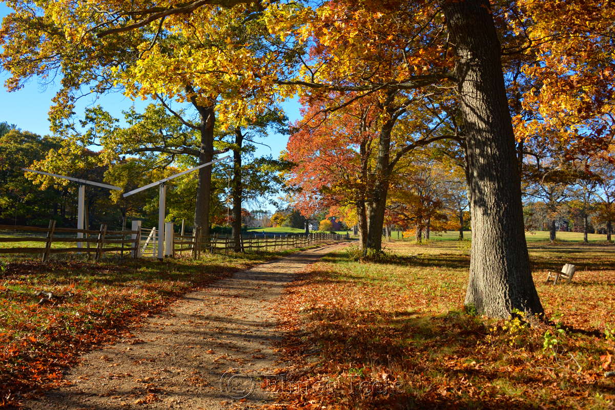 Appleton Farms - Fall Foliage 3