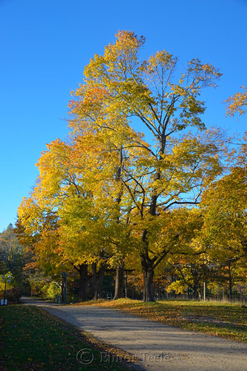 Appleton Farms - Fall Foliage 4