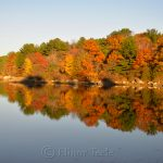 Goose Cove - Fall Foliage 1