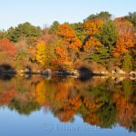 Goose Cove - Fall Foliage 2