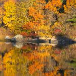 Goose Cove - Fall Foliage 3