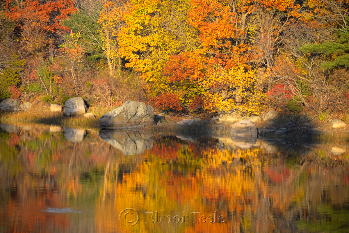 Goose Cove - Fall Foliage 4