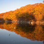Lobster Cove - Fall Foliage 3