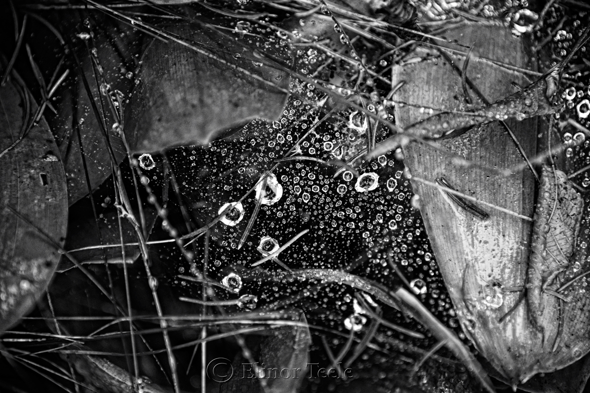Raindrops on Spider Webs - Abstract 5