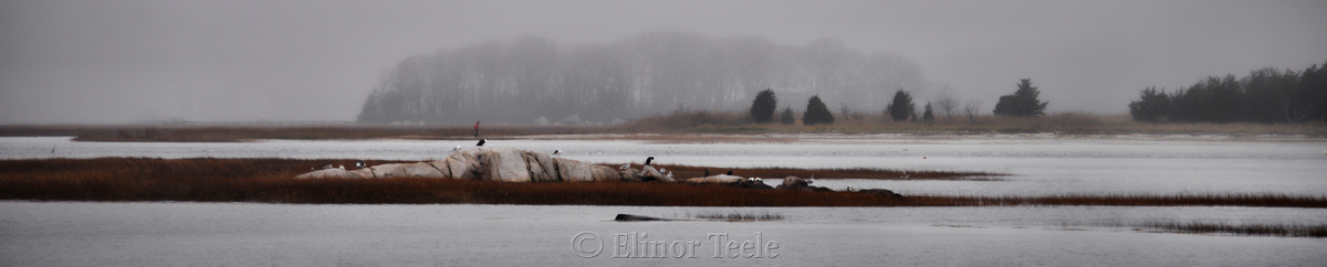 Fog on the Marsh