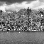 Water, Trees, Sky