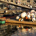 Market Docks