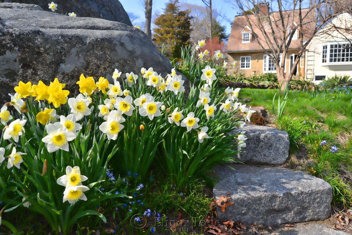 Spring in Annisquam