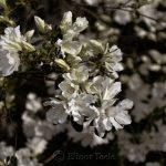 Azaleas (Dusk Filter) 2