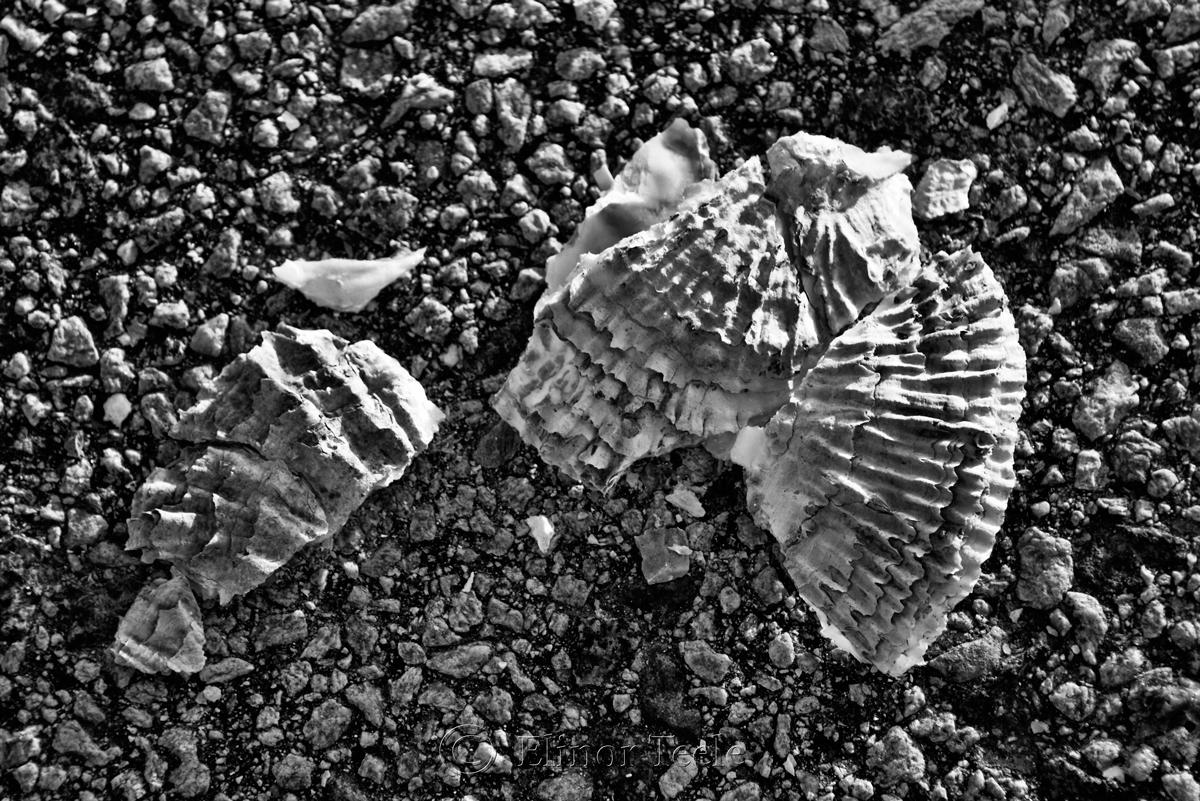 Broken Shells 1