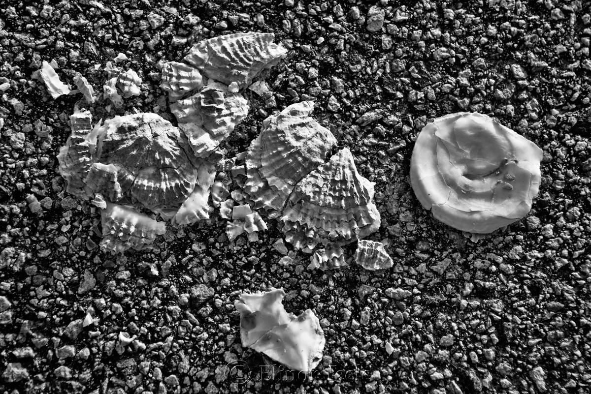 Broken Shells 10