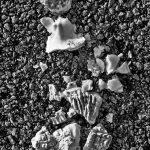 Broken Shells 11