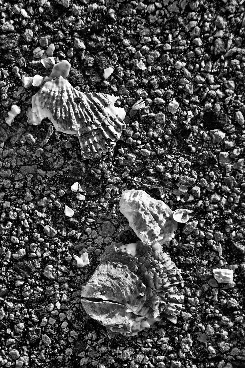 Broken Shells 12