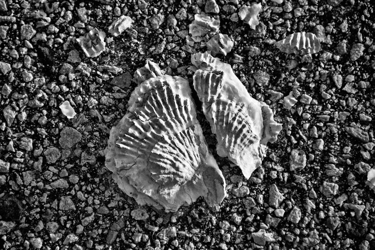 Broken Shells 2