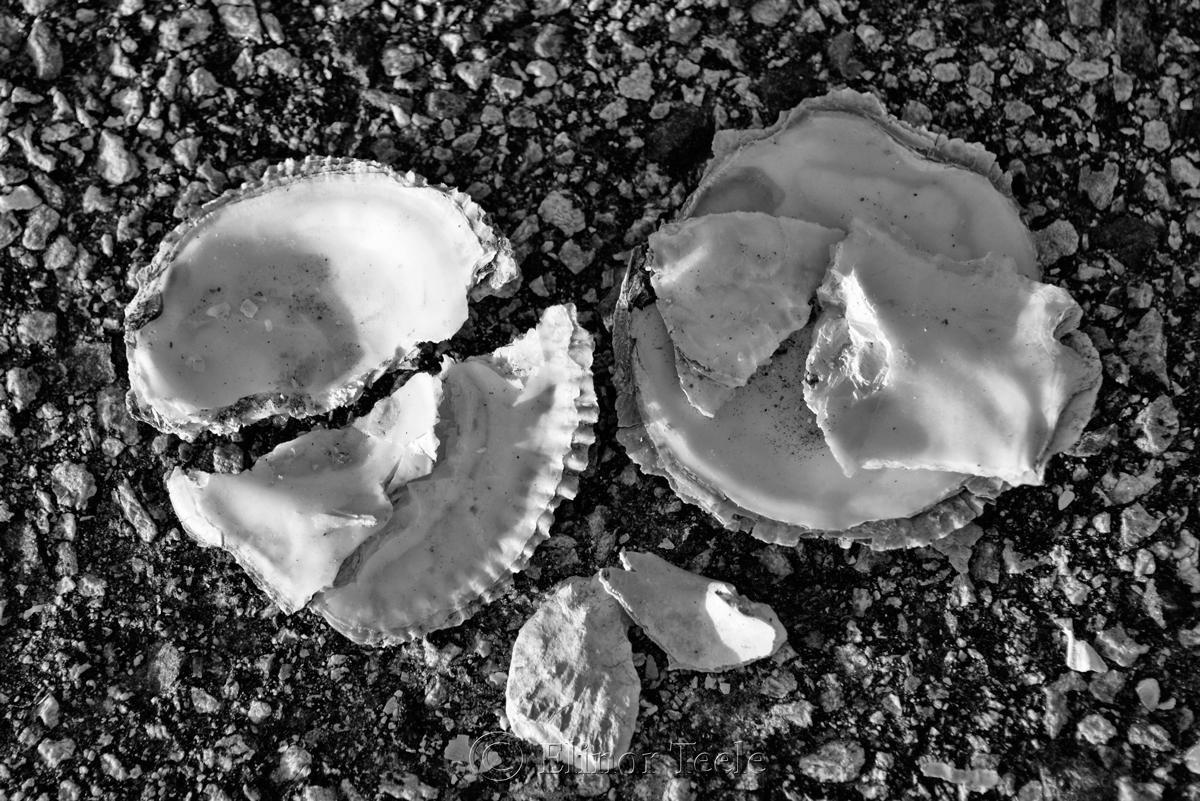 Broken Shells 6