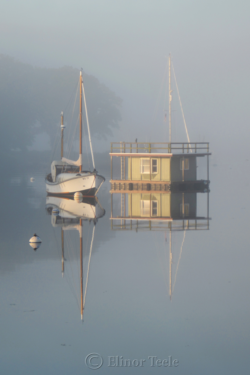 Fog on the Harbor 3