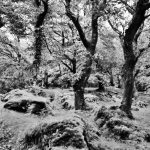 Killarney National Park 1