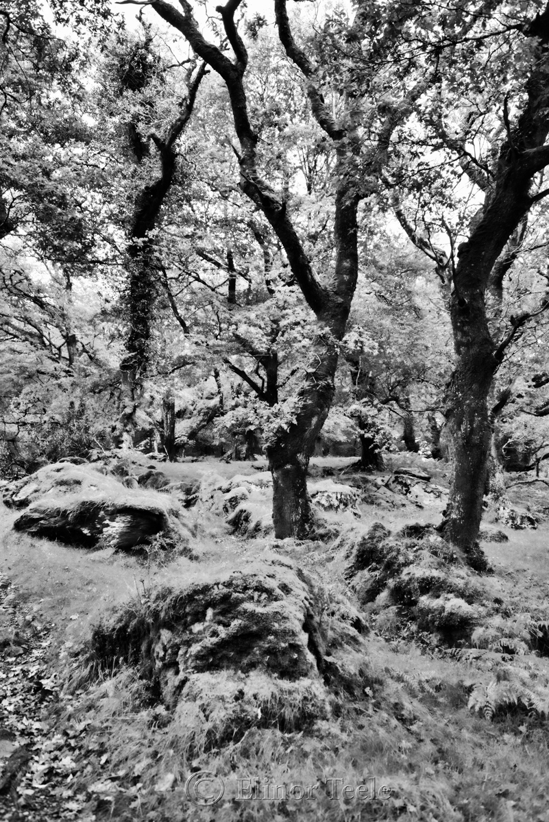 Killarney National Park 1