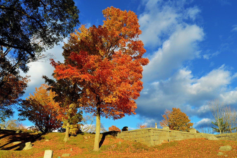 New England Fall Foliage - Cemetery 5