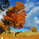 New England Fall Foliage - Cemetery 5