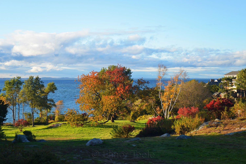 Fall Foliage - Pasture