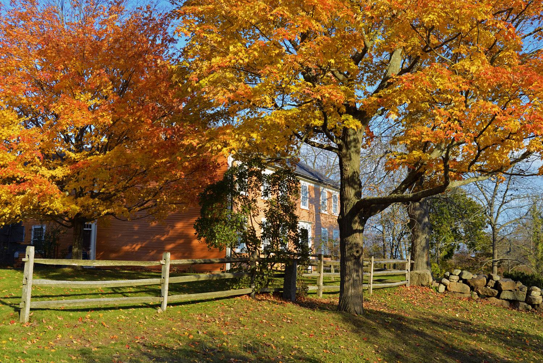 Cogswell's Grant - Fall Foliage, Essex MA 1