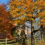 Cogswell's Grant – Fall Foliage, Essex MA 2