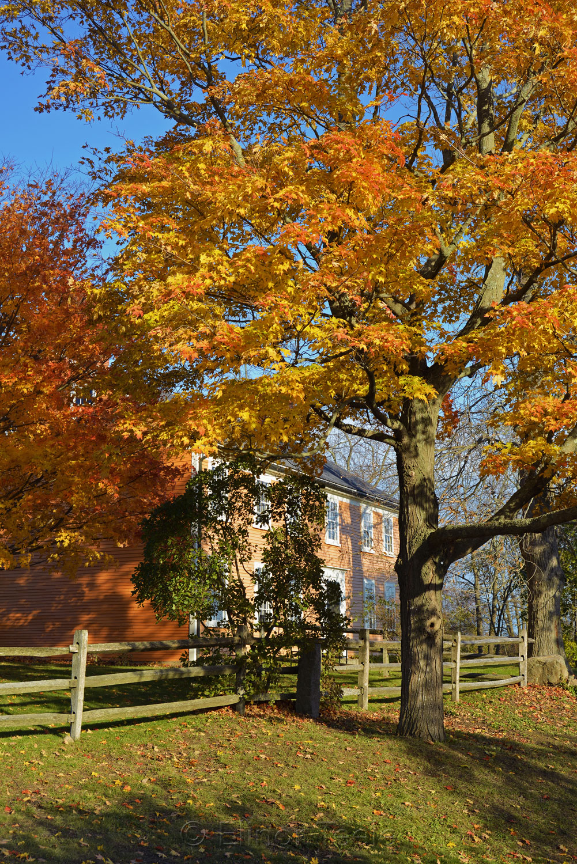 Cogswell's Grant - Fall Foliage, Essex MA 2