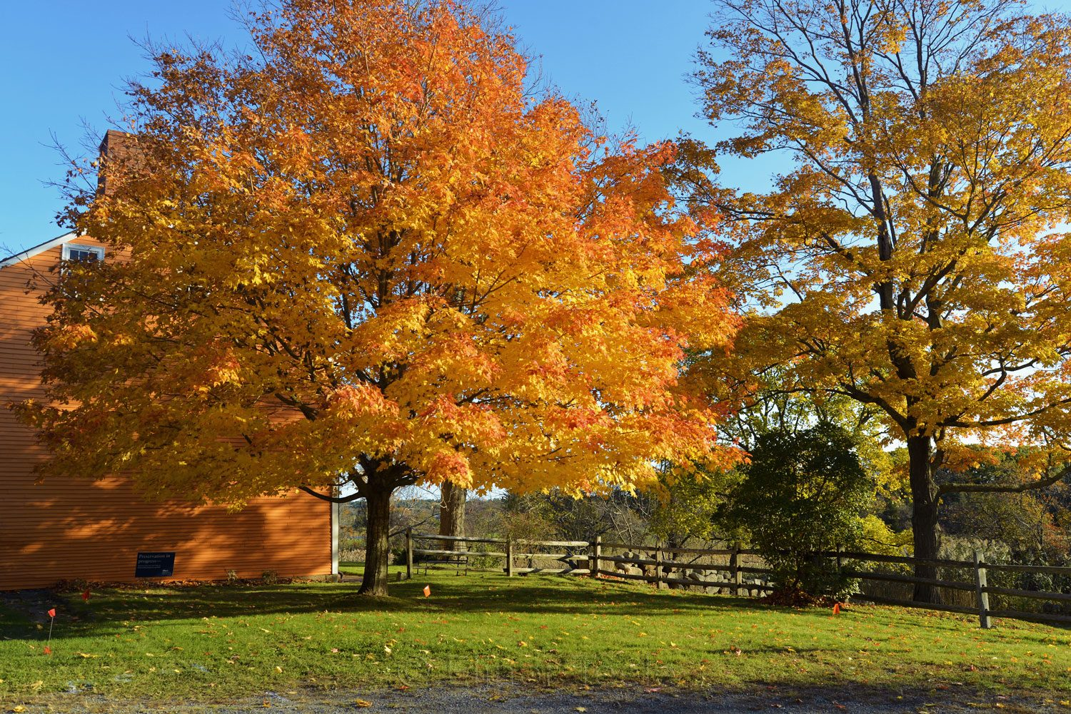 Cogswell's Grant - Fall Foliage, Essex MA 3