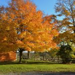 Cogswell's Grant - Fall Foliage, Essex MA 3