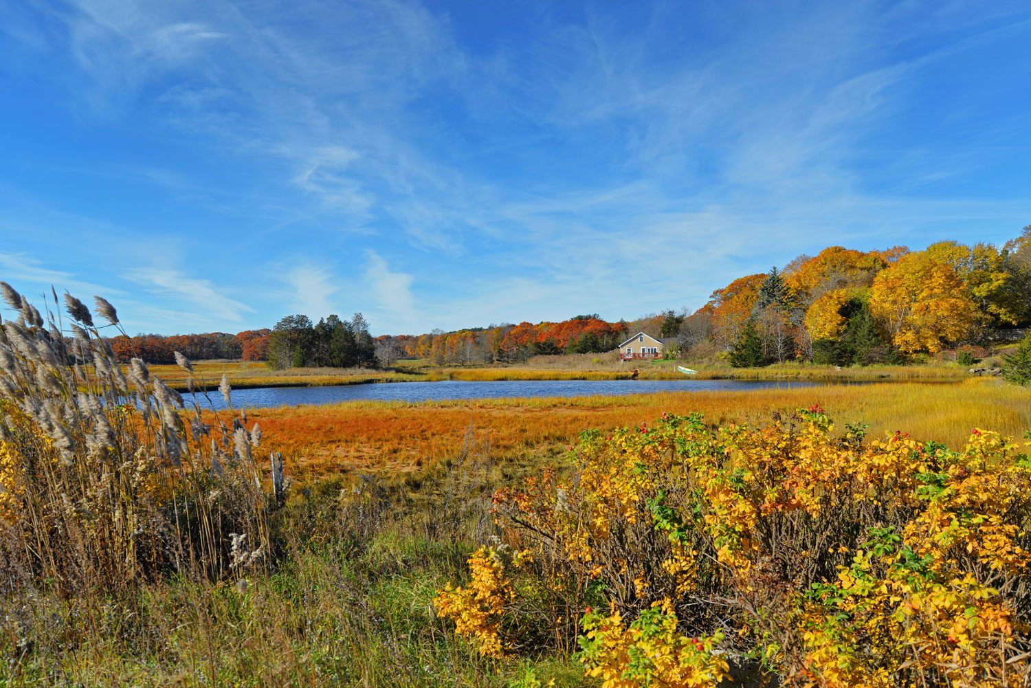 Golden Marshes, Essex MA