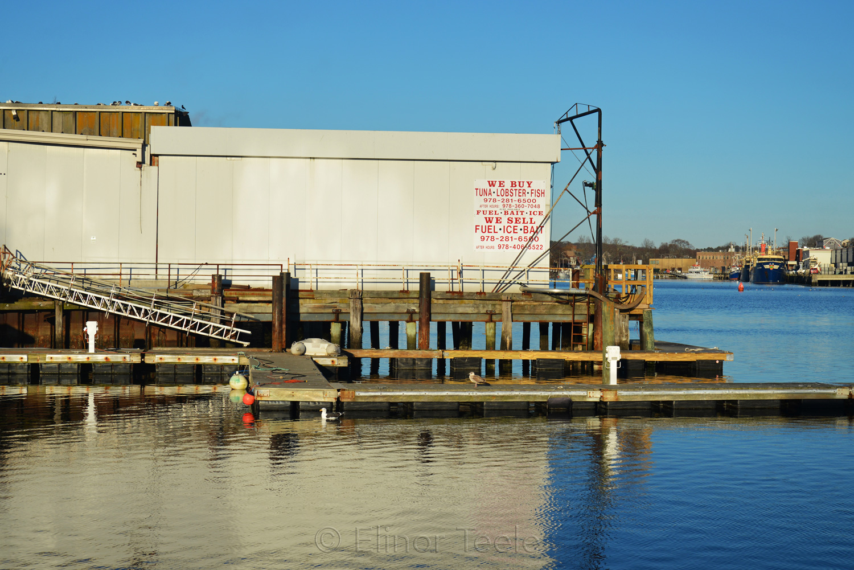 Gloucester Waterfront - We Buy Tuna