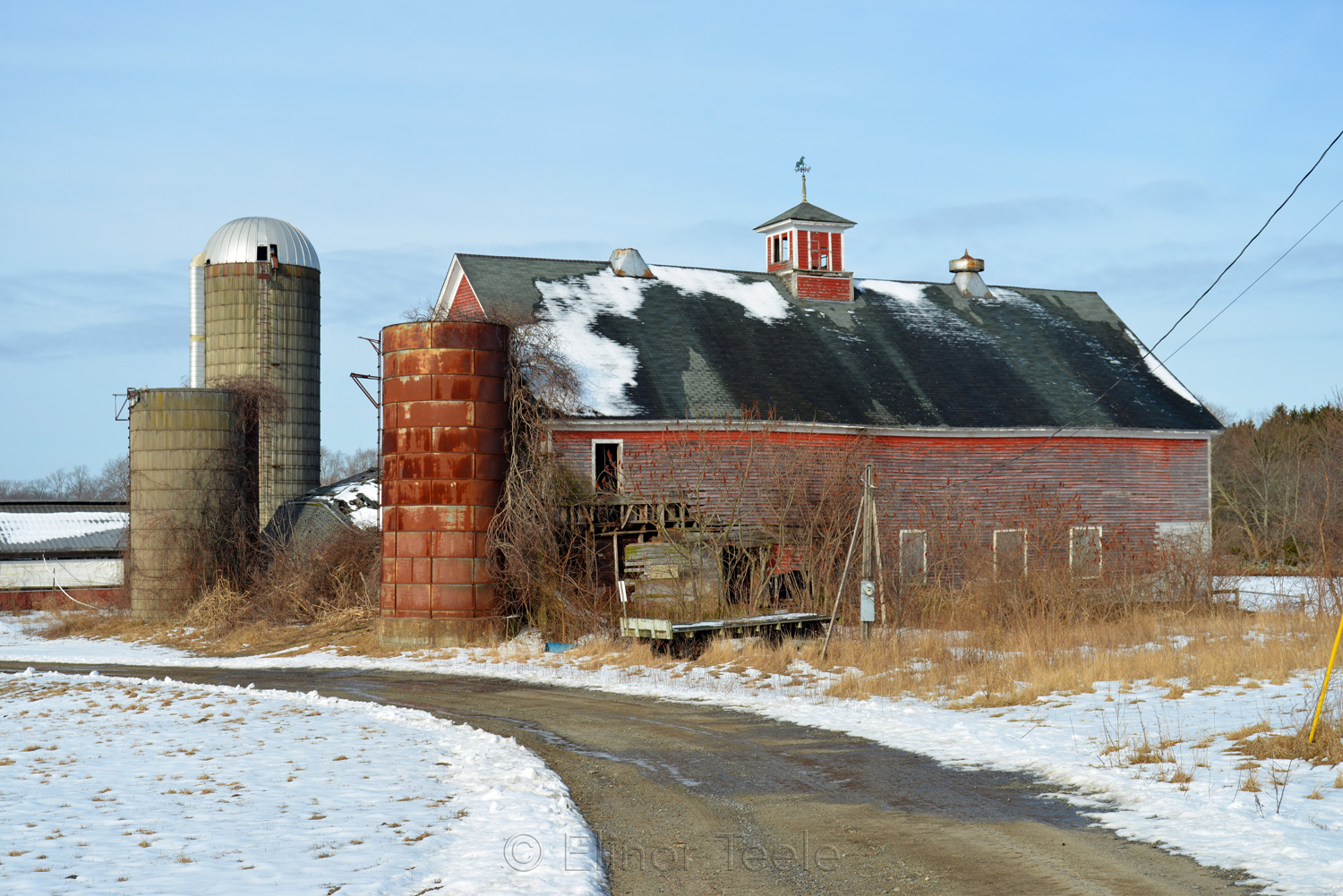Sunshine Dairy Farm Close-Up in Melting Snows