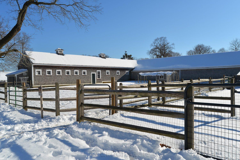 Farm Buildings in Winter - Appleton Farms