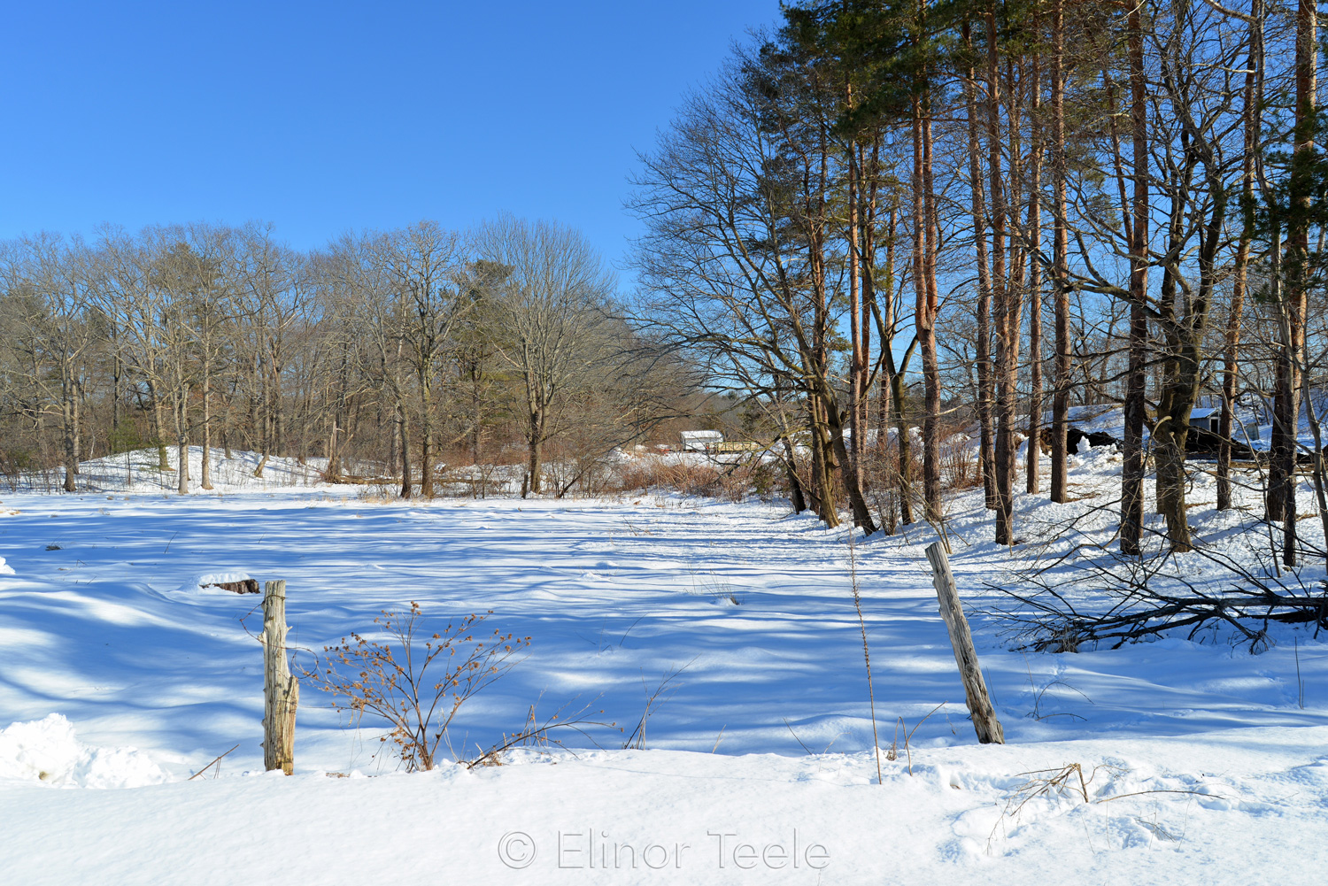 Fence & Trees in Winter - Appleton Farms