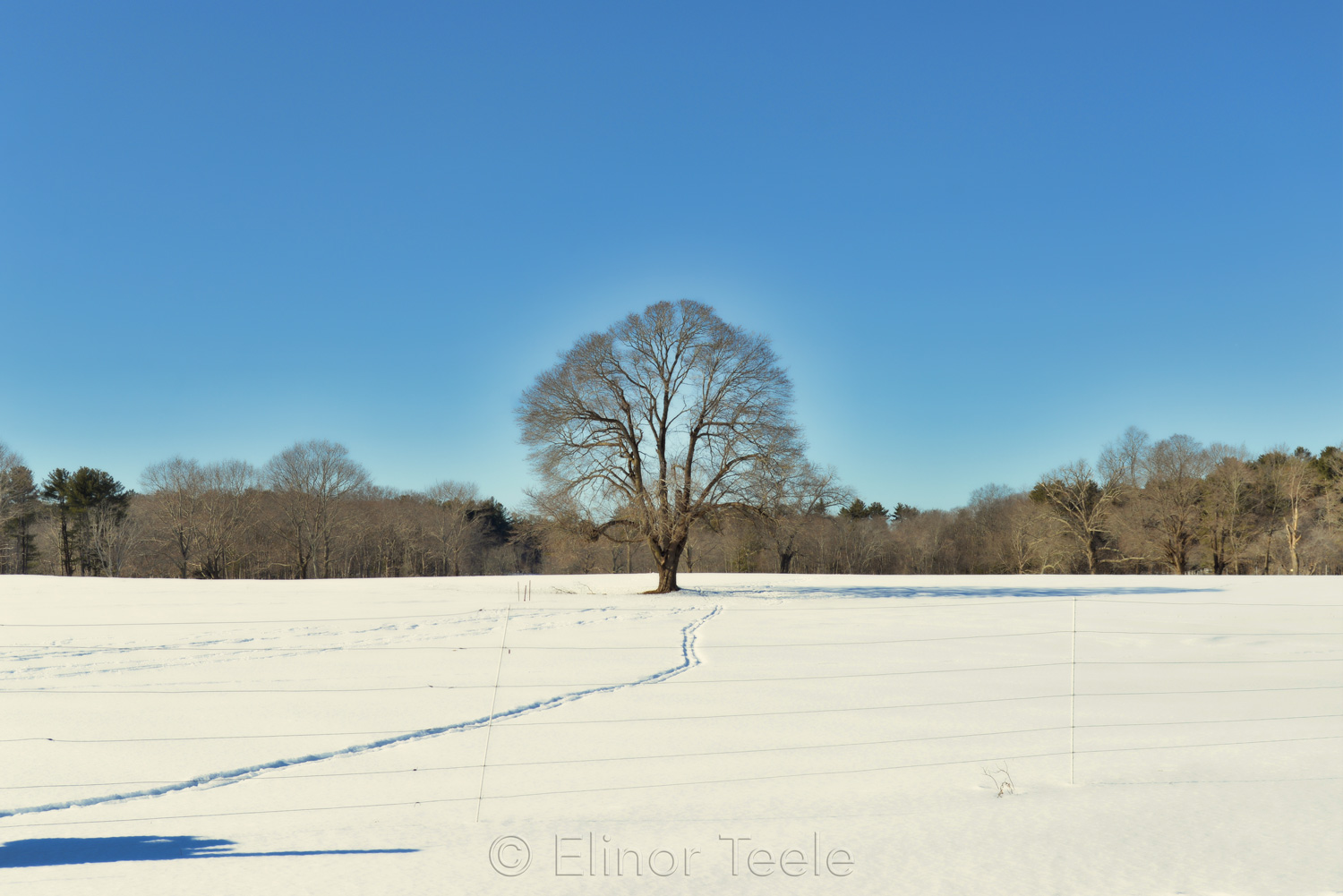 Lone Tree in Winter (Enhanced) - Appleton Farms