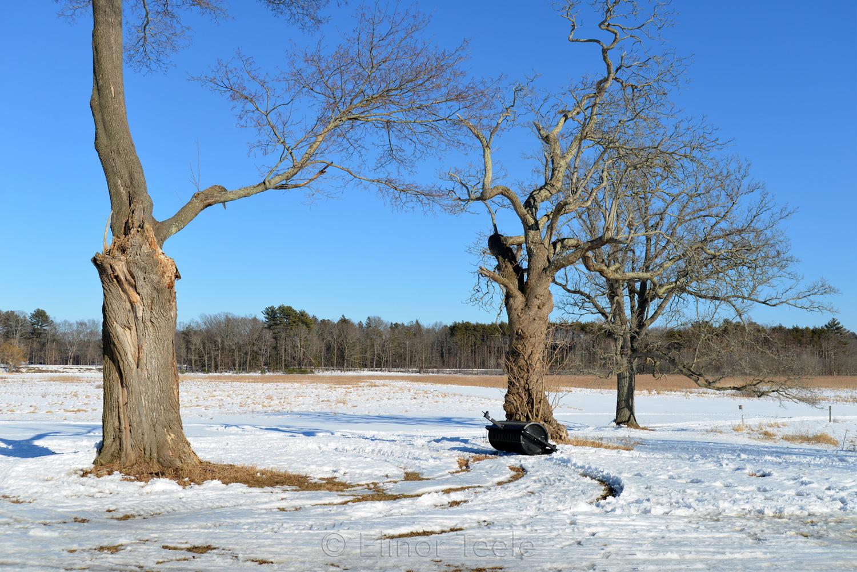 Trees in Winter - Appleton Farms