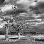 Appleton Farms - Cloudy Skies
