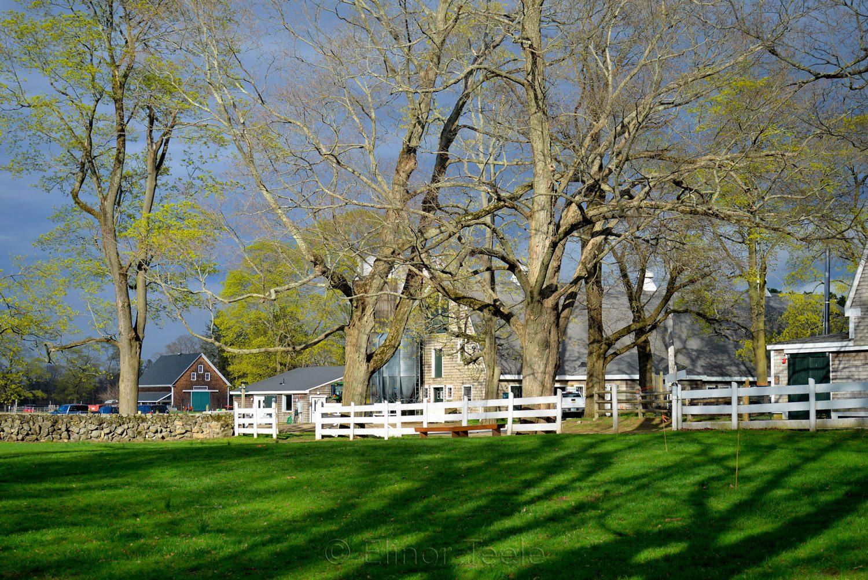 Appleton Farms - Green Lawn
